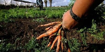 agricoltura_immigrati-2